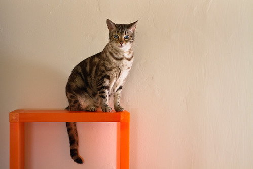 フリー写真素材, 哺乳類, ネコ科, 猫・ネコ,