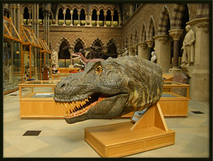 Tyrannosaurus rex head (Isisbridge) Tags: old uk england building brick english animal monster museum architecture giant mammal university arch dinosaur britain head teeth victorian naturalhistory oxford british prehistoric oxfordshire extinct carnivore tyrannosaurusrex cretaceous