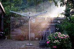Goodmorning (MosPos) Tags: morning light sun sunlight mist netherlands fog early bean wash ens goodmorning oj buiten ochtend mospos