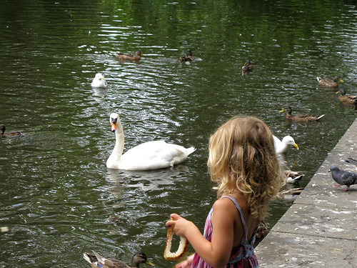 Little Girl Feeding Ducks and Swans - Dublin