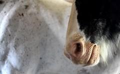 please do not feed (tech no logic) Tags: horses horse swap areal tinker gimpd irishtinker