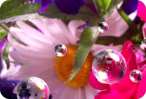 bubbles daisies