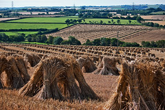 Stooks (me'nthedogs) Tags: wheat harvest devon southmolton stooks hillvillage thatchingstraw