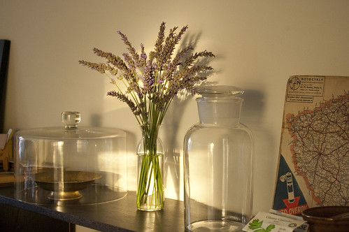 lavender, afternoon light