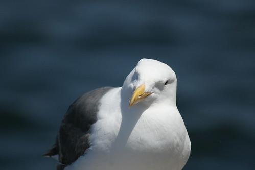 seagul 3