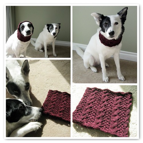 A  beautiful cowl from a beautiful person on two beautiful dogs