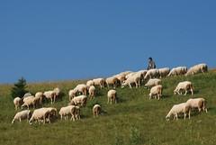 He leadeth me in the paths of righteousness (kosova cajun) Tags: landscape highlands sheep pasture kosova kosovo dele kosovë rugova peisazh bogë rugovë bjeshkëtenemuna accursedmountains bjeshkë albanianalps alpetshqiptare psalm23series
