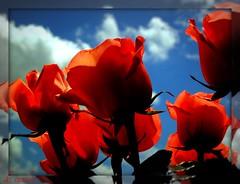 red white blue (ktinsley518) Tags: gl iek micarttttworldphotographyawards micartttt michaelchee