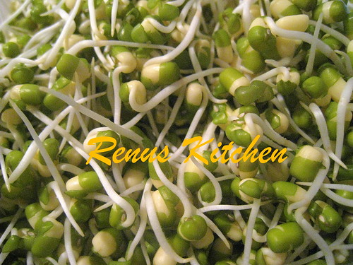 Moong bean sprouts