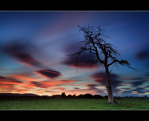 Stewart Tree - Sunset (angus clyne) road old blue sunset red sky orange cloud sun tree rot field grass pine forest canon river dead gold scotland cow moving big high long exposure branch slow angus bare hill perthshire deep fork glen stewart bark huge tall split cracked scots gloaming clyne colorphotoaward