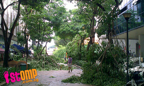 Heavy morning storm topples trees across island