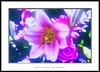 Mon esprit est heureux (Jose Luis Mieza Photography) Tags: flowers flores flower fleur fleurs flor benquerencia florews reinante jlmieza reinanteelpintordefuego joseluismieza