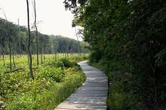 swap trail