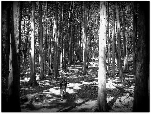 shadow shots -