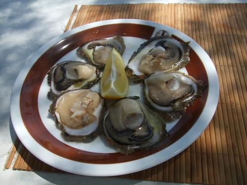Oysters in Croatia