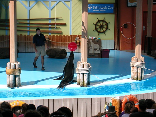 July 31 2010 Zoo Sea Lion show