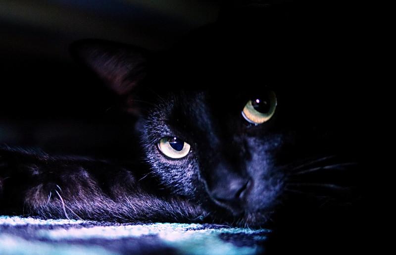 [分享]自家的貓兒