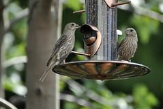 bird feeder society eastern region audubon