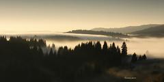 Dragons breath (Novica Alori) Tags: autumn mountain landscape dawn serbia zora spruce myst srbija jesen planina zlatar raka pejsa