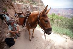 baudchon-baluchon-grand-canyon-6368240710