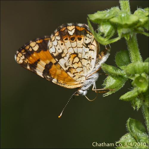 Butterflies #5