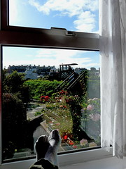 Last Morning in Wales (Oh Kaye) Tags: flowers sky window stairs view rooftops trainengine putyourfeetup ourdailychallenge