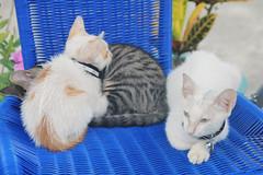 IMG_0539 () Tags: taiwan taipei    taipeicounty   houtong    catvillage rueifangtownship houtongcatstreet
