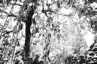 町田樹 画像68