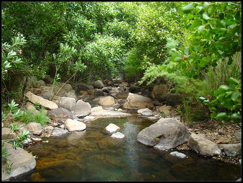 Arroyo de la Garganta del Espino