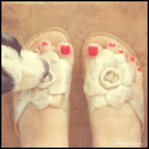 219/365 puppy love