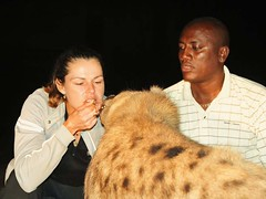 2a. Feeding the wild hyenas