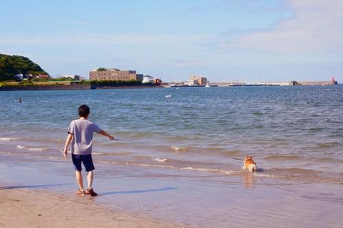犬も泳ぎたい