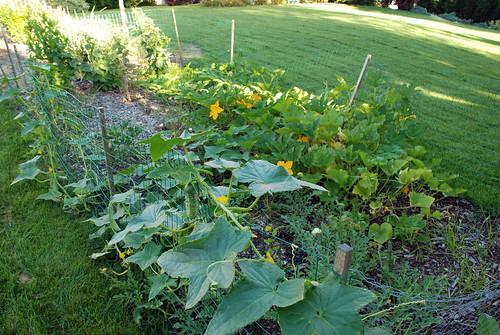 Garden of vines