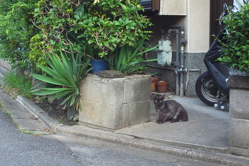 Today's Cat@2010-08-12