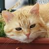ciccio (archifra -francesco de vincenzi-) Tags: italy cat chat gato gatto ciccio ohhh molise isernia otw katzte flickraward estremità archifraisernia francescodevincenzi