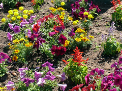 Colorful Array (Glenn Harris (Clintriter)) Tags: pink flowers red orange white green yellow oregon colorful purple blossoms blooms hoodriver array simplyflowers