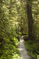 Along the Boardwalk (mgier photography) Tags: old trees summer green rainforest vancouverisland boardwalk lush canopy majestic 2010 pacificrimnationalpark creaking