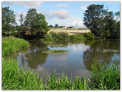 Ford Dam (ExeDave) Tags: uk england ford landscape geotagged pond waterlily derbyshire sheffield august gb greenbelt wetland 2010 millpond mossvalley forddam fordvalley lowermossvalley emergentvegetation sheffieldcountrywalk emergents localpatch p8111900 geo:lat=5331850555705398 geo:lon=1396524999999997