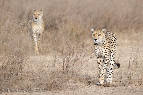 RYALE_Ngorongoro_Crater_54