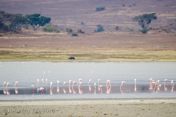 RYALE_Ngorongoro_Crater_75