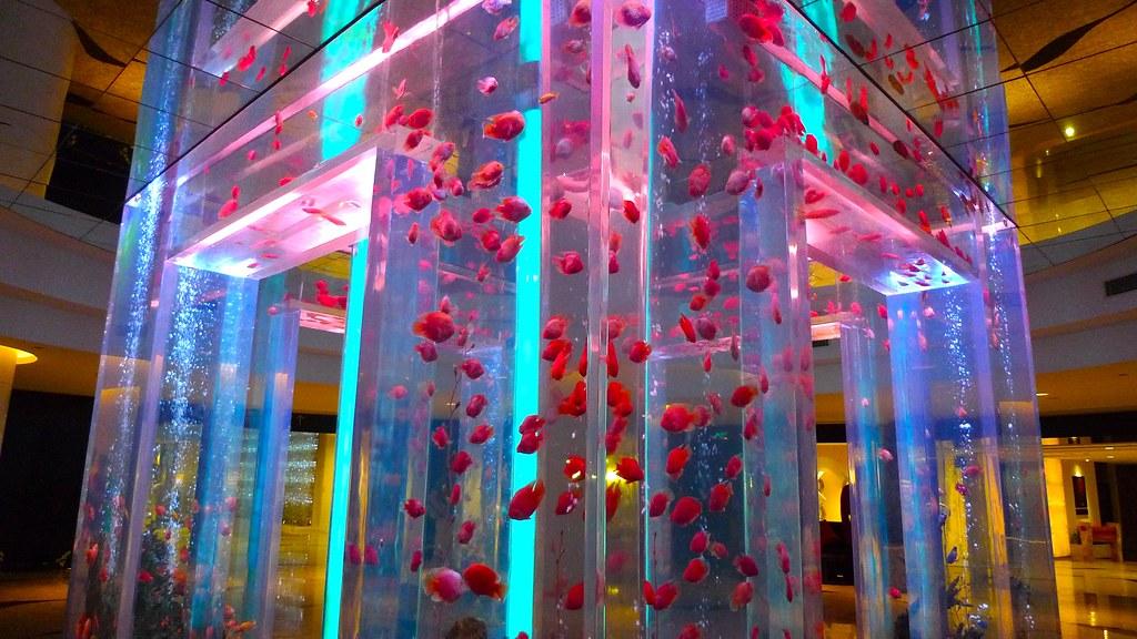 Neon Swimming