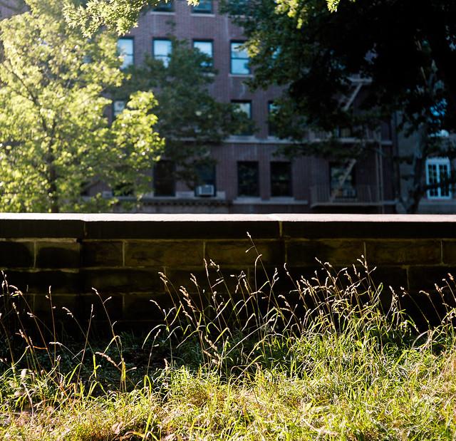 summer in prospect park