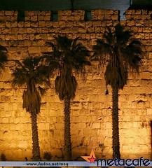 (Rula Ameer) Tags: wallpaper love beautiful wonderful amazing funny god unique palestine muslim eid adorable fast card mohammed ramadan saudiarabia prophet marvelous magnificent fitr  allah islamic makkah adha hajj companions  madinah    aqsa  greendome  spiritualist          omrah numinous isalm                     masjednabawi hojaj