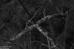 branch (Mex::::::Gabriel:::Parker::::::Arg. 2016 images) Tags: gotas detodounpoco trilogias gparkerm20106tatemporada