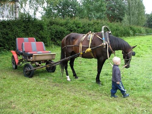Sai hobusega sõita