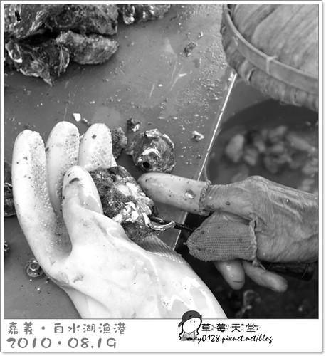 白水湖漁港4-2010.08.19