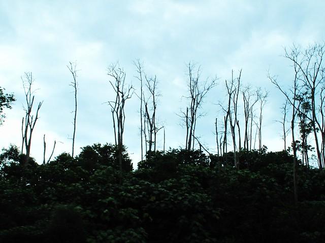 IMG_2054 Dead Trees