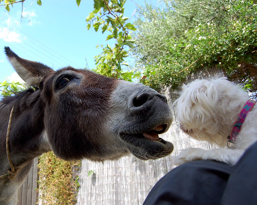 Scenes from a Dog & Donkey Show in a village in Crete