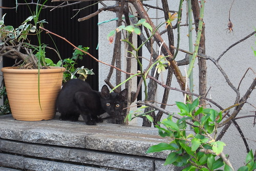 Today's Cat@2010-08-23