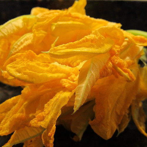 Pumpkin Blossoms